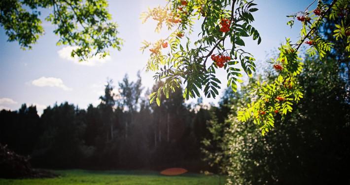 Mets - Lõuna-Eesti Erametsa OÜ