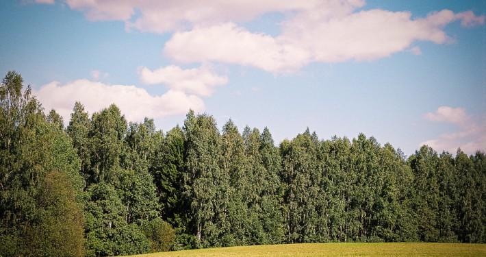 metsa müük