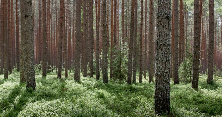 metsa ost ja metsamaa ost