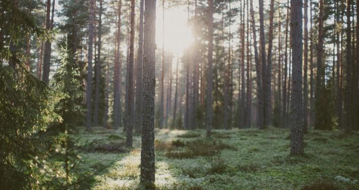 metsa ost Lõuna-Eestis