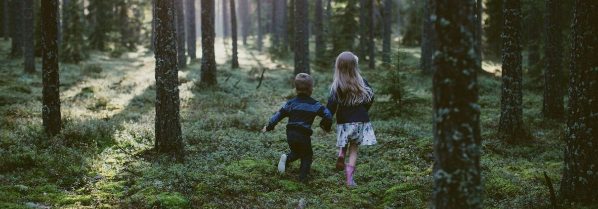 Raieõiguse ost - Lõuna-Eesti Erametsa OÜ